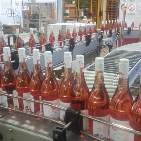 Bottling the first Dayvinleigh Rosé
