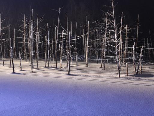 (No.41) もっと効果を、青い池の冬ライトアップ~集客効果の事例研究