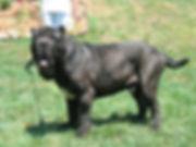 Furio at 15 months.jpg