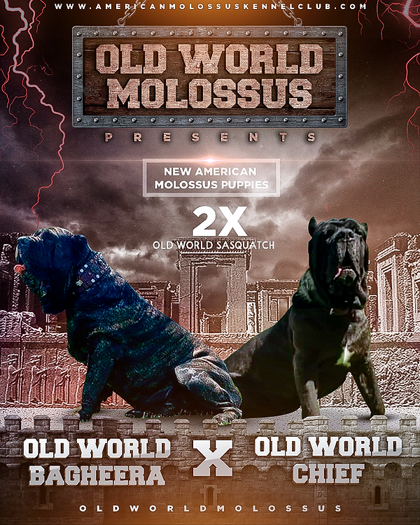 OldWorldMolossus banner Chief x Bagheera 9-4-21.png