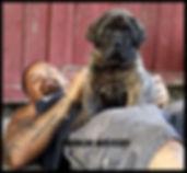 American Molossus pup Sasquatch and I at
