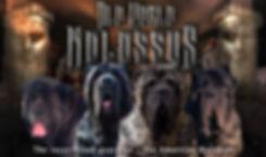 American Molossus banner 8-13-2019.jpg