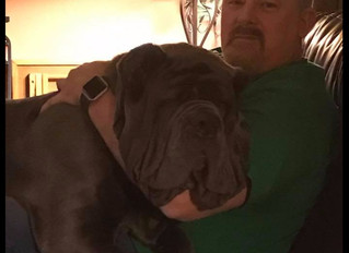 What is most important in a Neapolitan Mastiff or American Molossus?