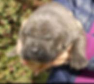 Don vito pup 1.jpg