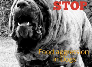 How to STOP Food aggression in Dogs