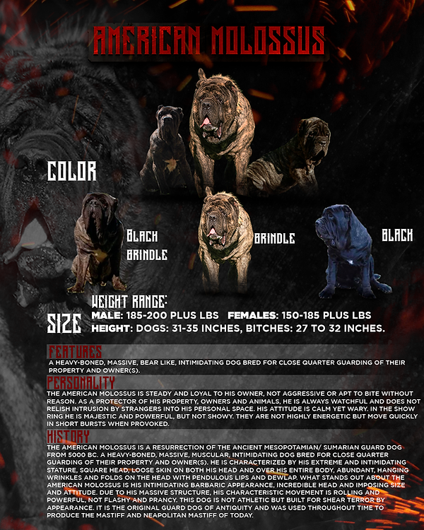 American Molossus color and features cha