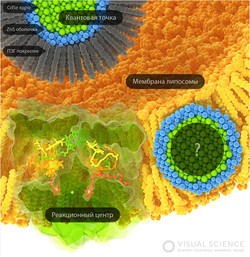 Visual Science, medical animation