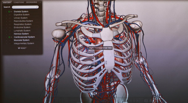The Virtual Anatomy, Ready for Dissection