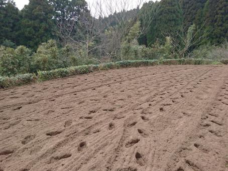 畑が耕されました