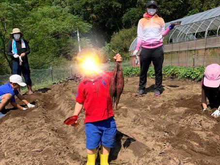 芋掘り大会