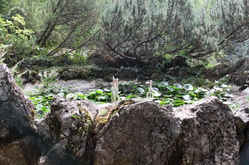 Giardino Pietra Corva : Aunpassodallavetta lanello del giardino alpino