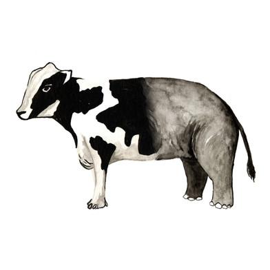 Vacafante