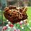 Thumbnail: Biscoff Brownie