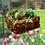 Thumbnail: Mint Brownie