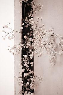 white-cherry-blossom-in-bloom-3582497.jp