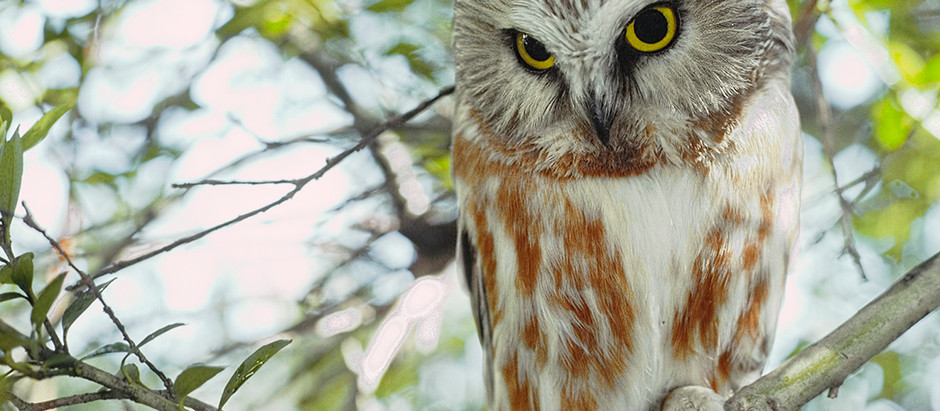 The Ethics of Watching OWLS in NYC