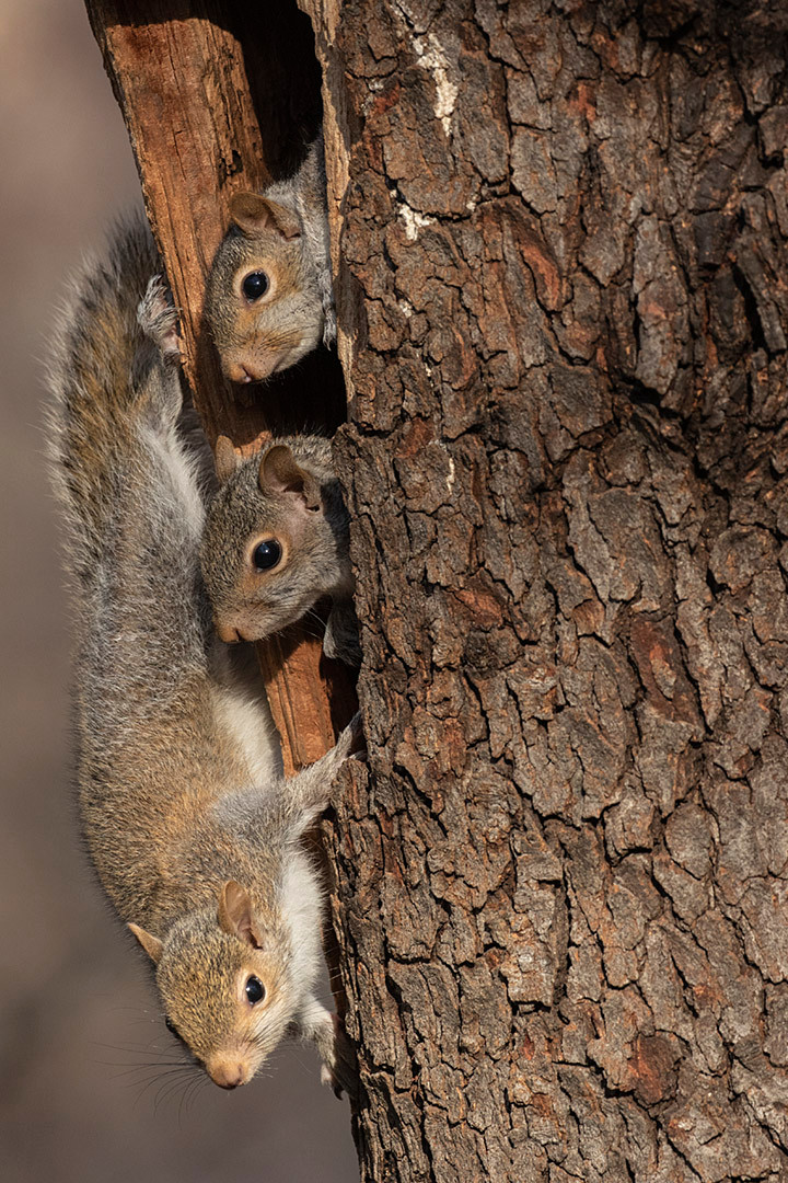 Squirrels in Central Park by Deborah Allen on 6 April 2019
