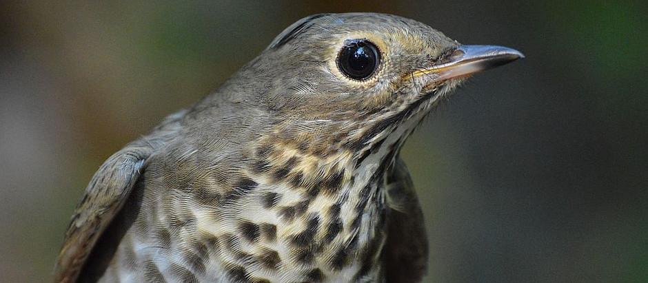 October is Nooki-Nooki Birding in Central Park
