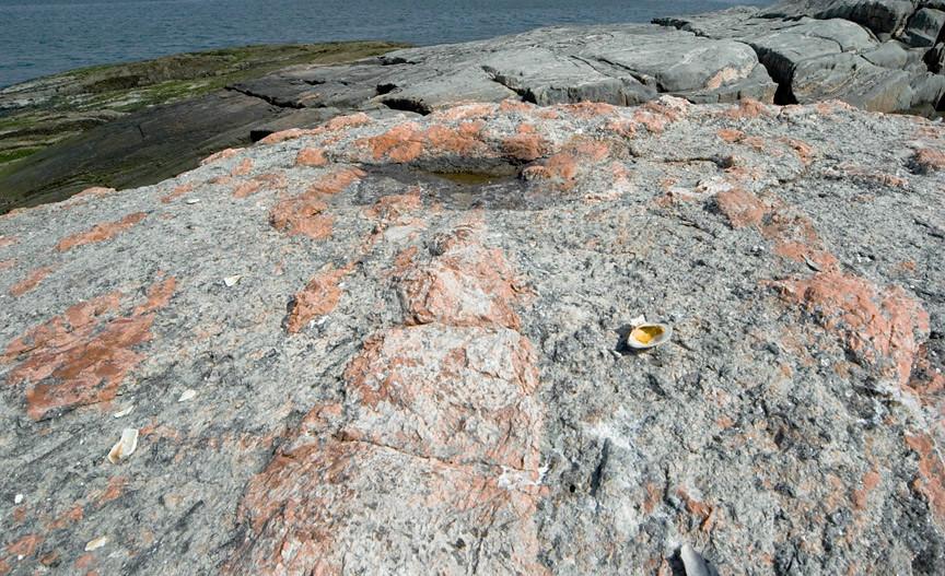 pink pegmatiite intrusion into gneiss bedrock, Hunter Island, Pelham Bay Park in the Bronx on 29 December 2018