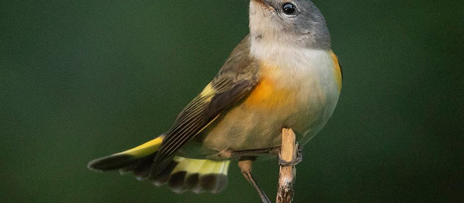 Central Park: August-September Bird Walk Schedule