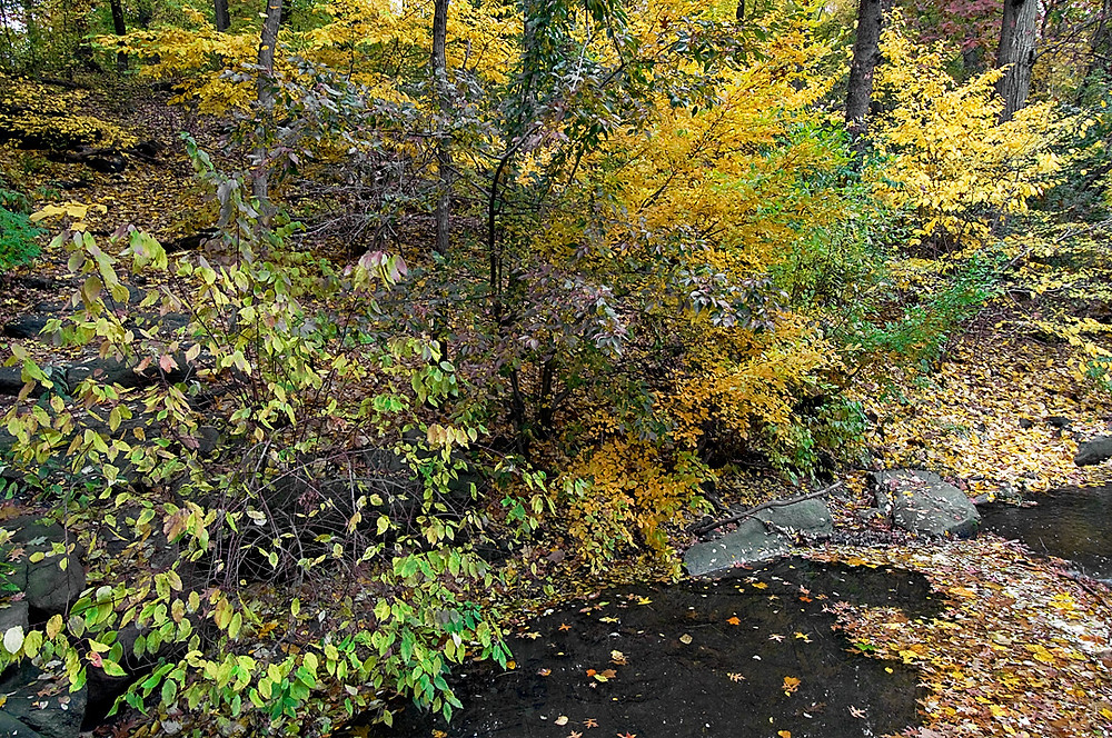 Along the Loch in the North Woods of Central Park on 9 November 2008