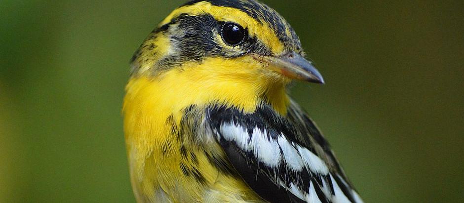 Sunday Birdwalks (3 September) as scheduled (7:30am/9am) - rain no problem