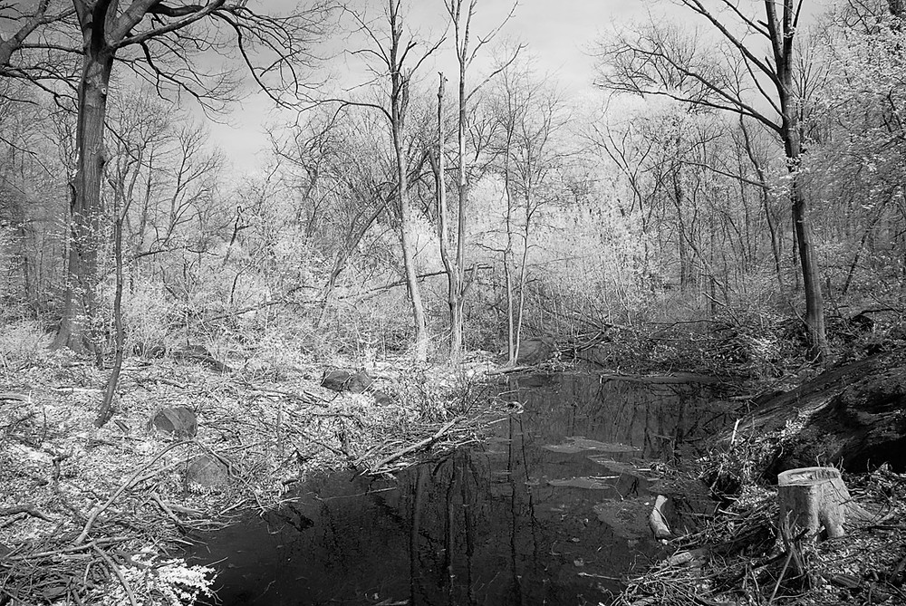 Along the Bronx River at West Farms, December 2009: Black-and-white Infra-red image