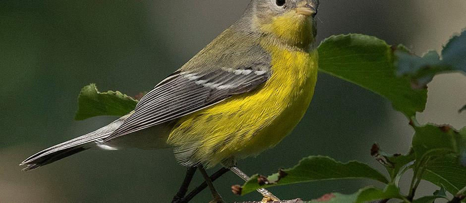 11 September 2001: Birding Central Park