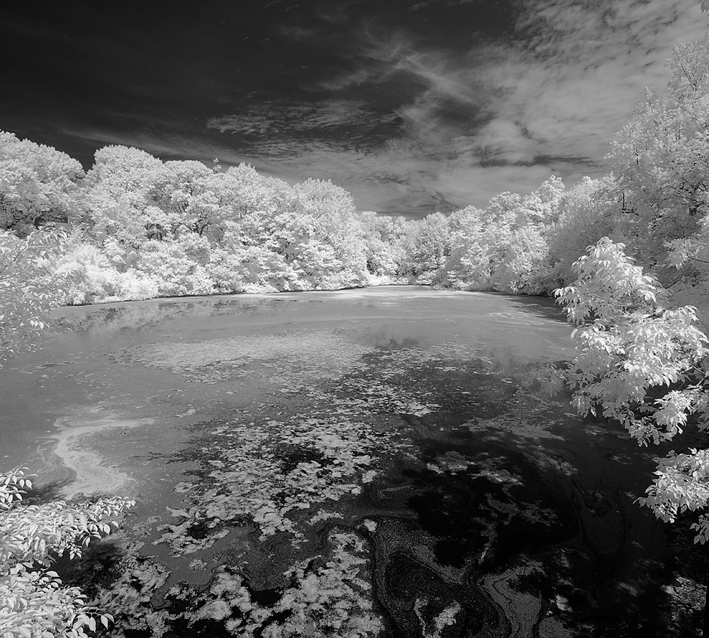NYBG (Twin Lakes area) in B/W Infra-red August 2012