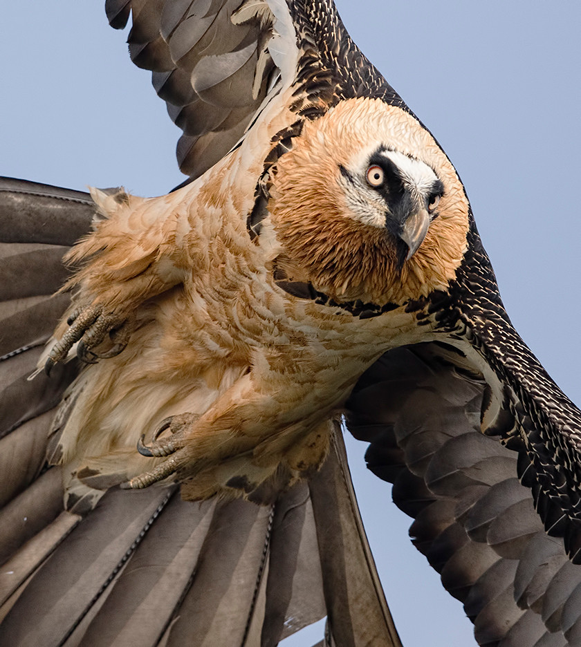 Rough-legged Hawk (light morph) at Ft. Pierre National Grasslands (South Dakota) on 6 February 2020