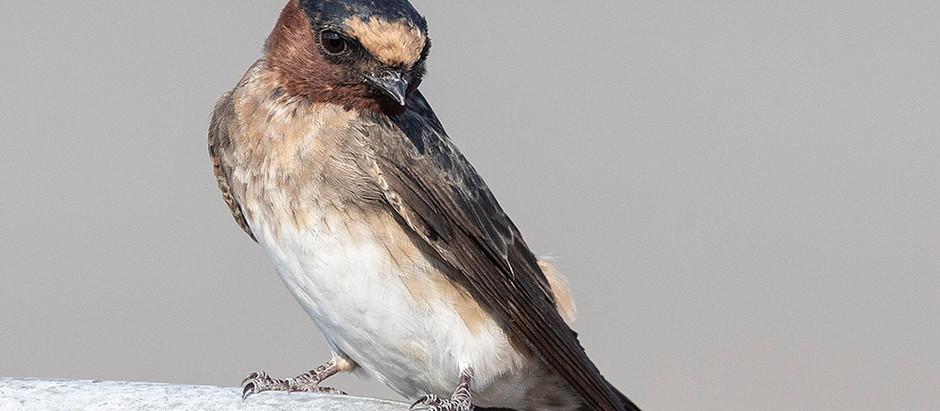 The Birding Floodgates are Open: Central Park September 2021