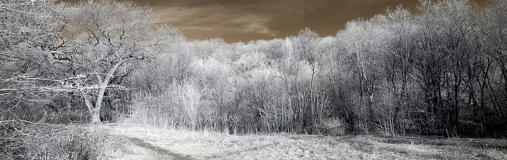 North Woods, Central Park in Infra-red (Winter 2012)