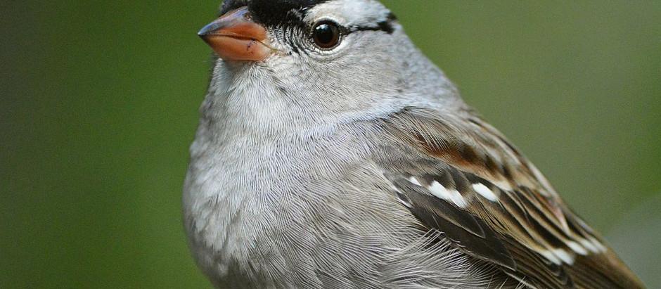 Central Park Birding mid-October 2021: DIVERSITY (+ an Owl)