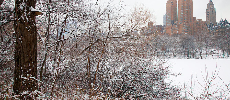 Snowstorm Birding in Central Park: March 24-25 with Jeff, Deborah and Bob