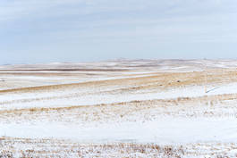 Ft. Pierre National Grasslands - Feb 2020