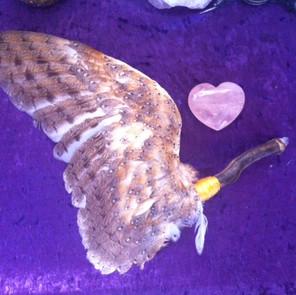 Owl Aura Sweeper