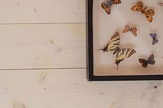 návrhy interiéru motýli dekorace