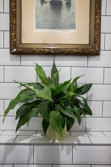 obklad dekorace pokojová květina rostlina bílá koupelna starožitný obraz rám návrhy interiéru