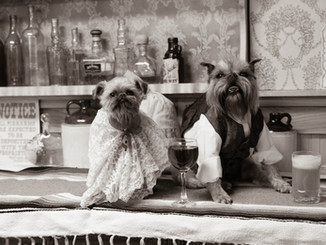 Dogs at the Saloon!