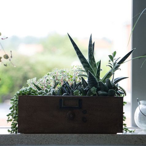 Succulent drawer | Peace of Plant