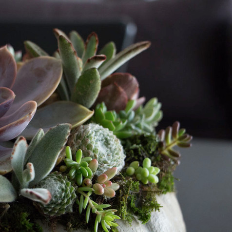 Succulent topped pumpkin | Peace of Plant