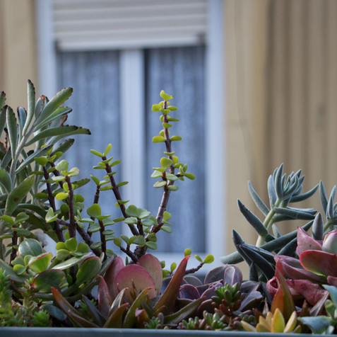 Succulent window box | Lisbon | Bairro Alto | Peace of Plant