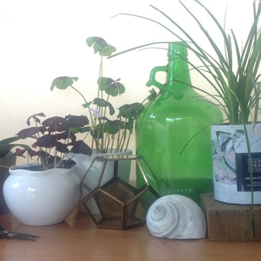 Gardening workshop |  Peace of Plant