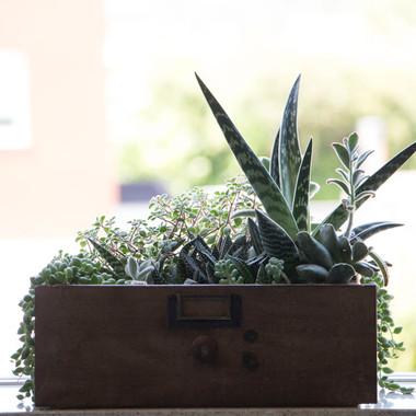 Succulent drawer terrarium |  Peace of Plant