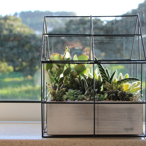 Succulent miniature greenhouse | Peace of Plant