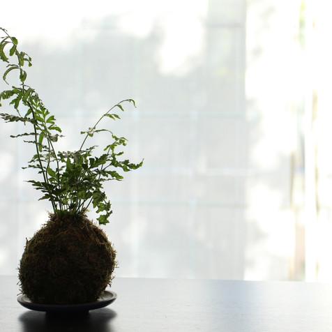 Fern kokedama | Peace of Plant