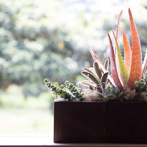 Succulent box | Peace of Plant