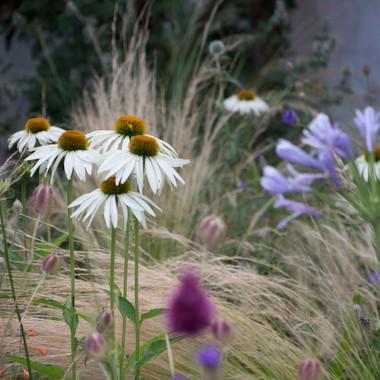 Prairie planting   Peace of Plant