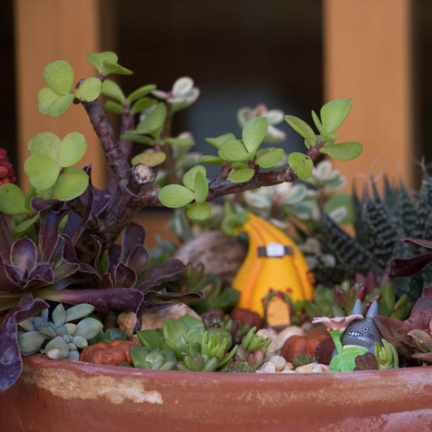 Halloween | Fall Fairy Garden with Totoro | Peace of Plant
