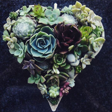 Succulent Heart | Succulent gift for Valentine's Day |  Peace of Plant